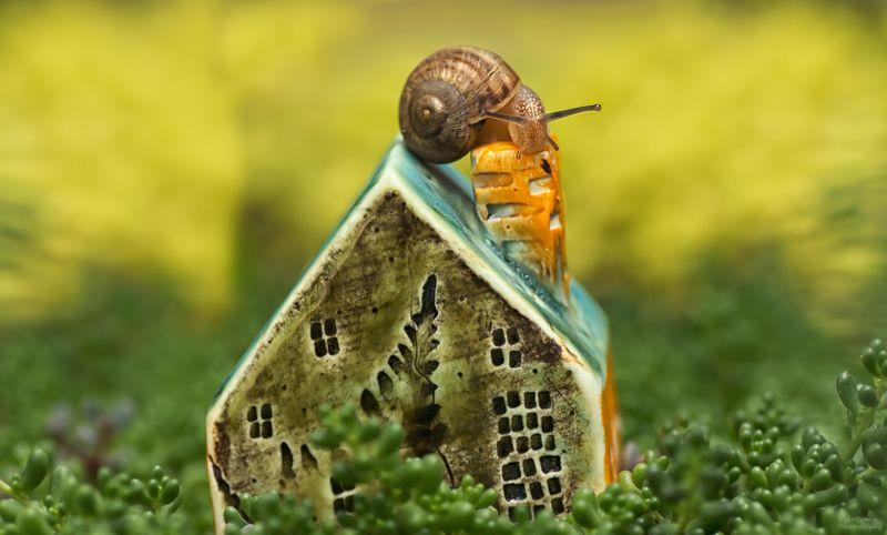 макро, природа, улитка, растения, суккуленты, macro, nature, snail, plants, succulents, а не переехать ли мне в новый дом?photo preview