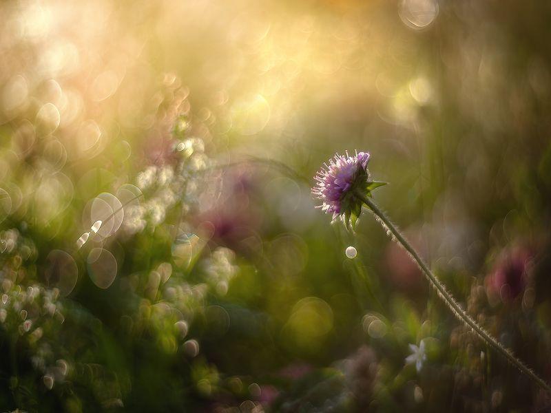 Утренные росы...photo preview