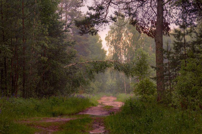 вечер туман лес дорога лужи Воспоминания о снежной зимеphoto preview