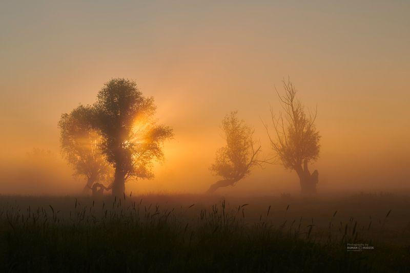 landscape, fog, Poland, trees, field, sunrise The spell of the mistsphoto preview