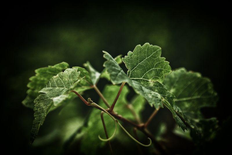 Vine...photo preview