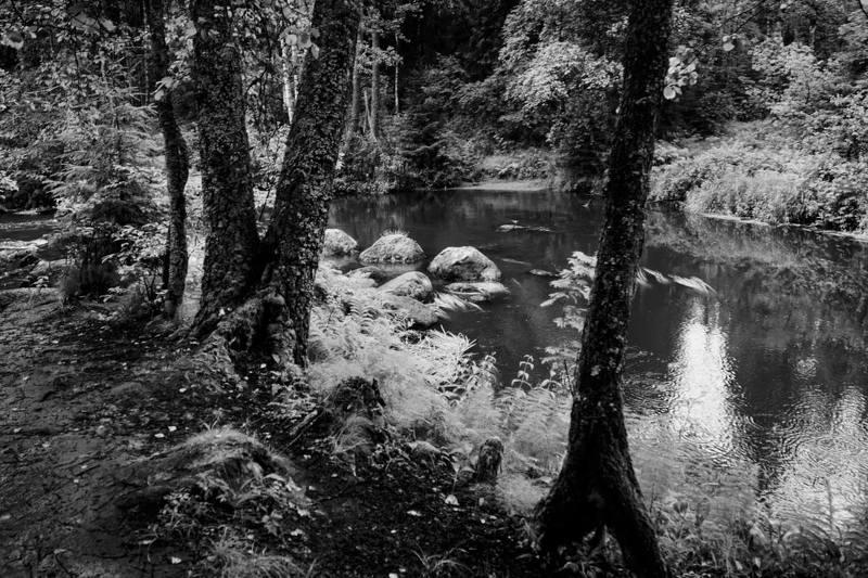 Лесная речка Рощинкаphoto preview