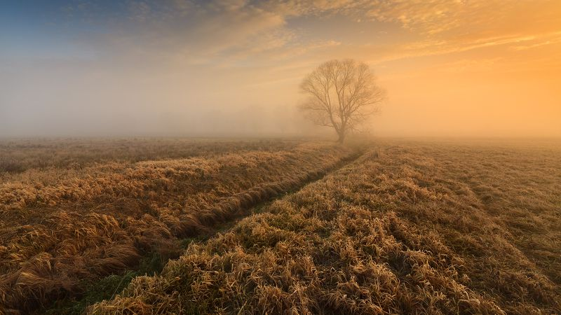 польша, mist, fog, poland, lesser poland, tree, golden hour, tranquility, outdoor, meadow, grass, plain, alone, clouds, sunrise, silene, утро, atmosphere, mood, nature, bare, willow, ***photo preview