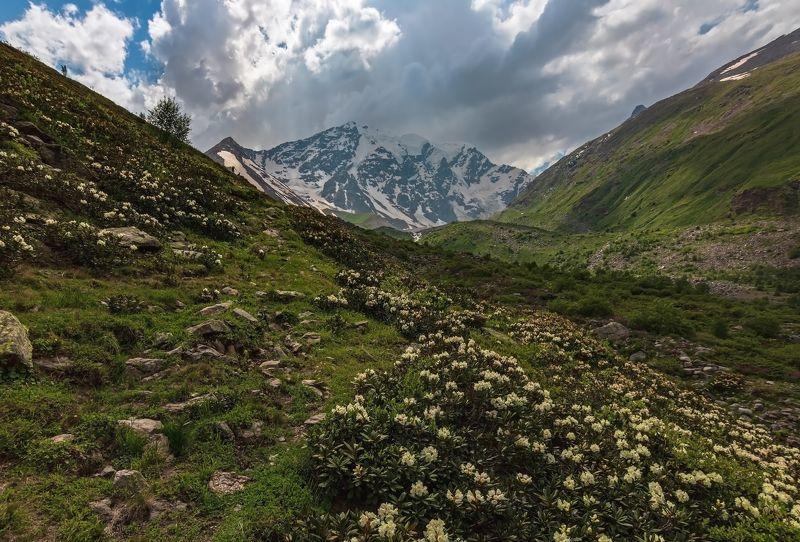 горы,восхождение,кавказ,облака вальс цветов...photo preview