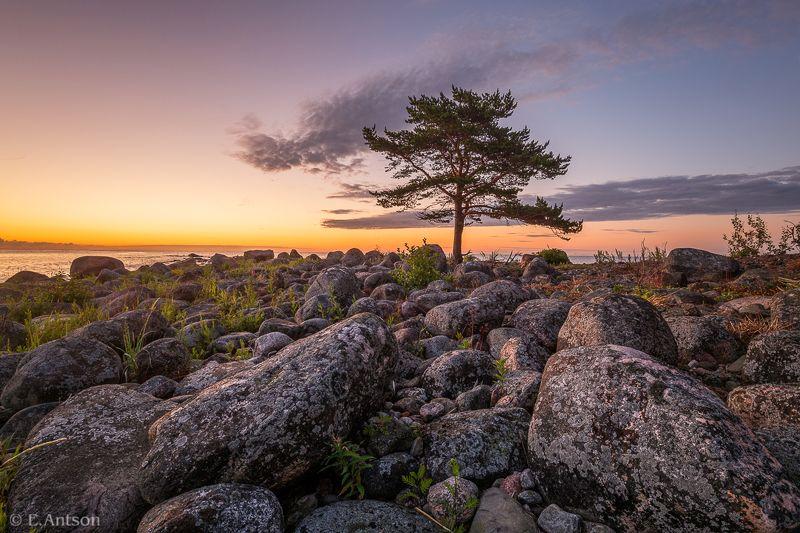 пейзаж, природа, эстония Перед рассветом фото превью