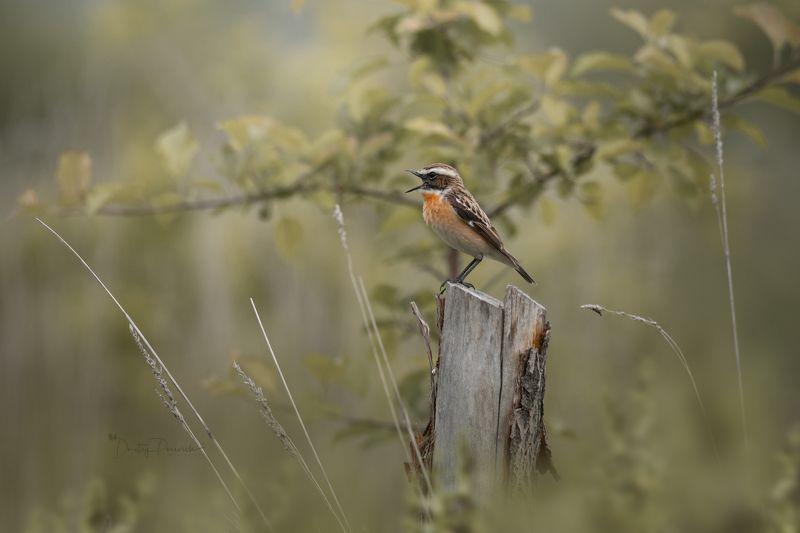 природа, лес, поля, огороды, животные, птицы, макро Предрассветная ...photo preview