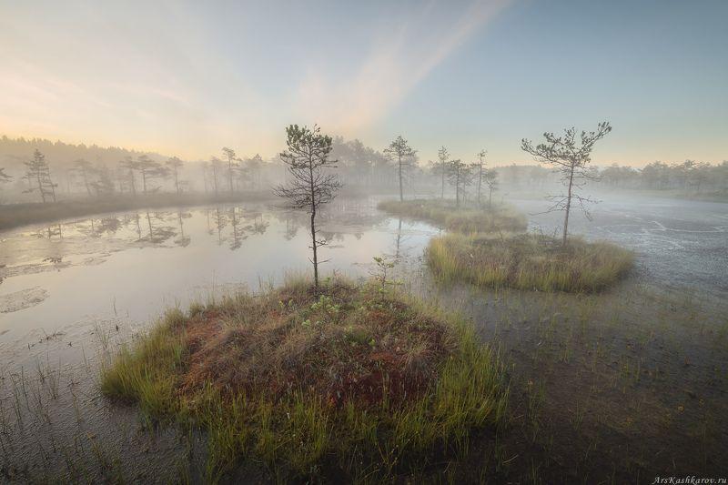 болото, ленобласть, фототур, туман, ленинградская область, дымка, болотные топи \