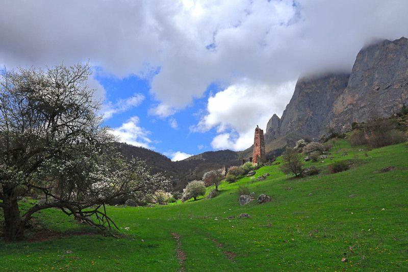 Кавказ, Ингушетия, весна, башня, Цей-Лоам Весна в Краю башенphoto preview