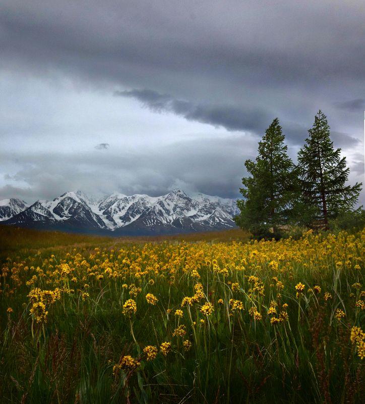 алтай цветы утро горы Рассветphoto preview