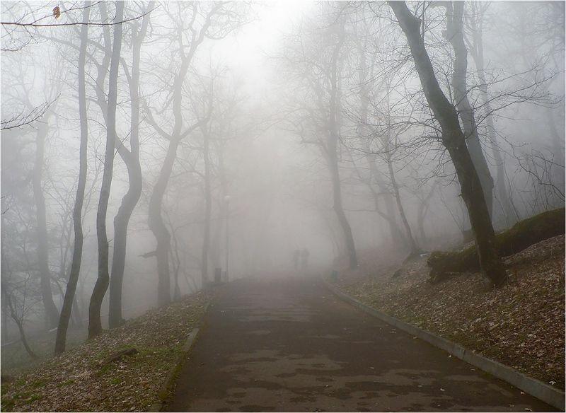 туман Осенний паркphoto preview