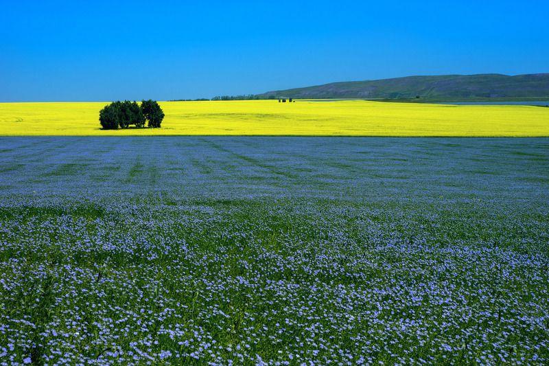 Желтая полоса фото превью