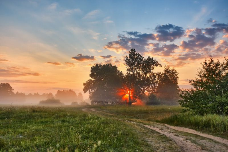 беларусь, дорога, дубрава, июль, лето, луга, рассвет, туман, утро Утро Июляphoto preview