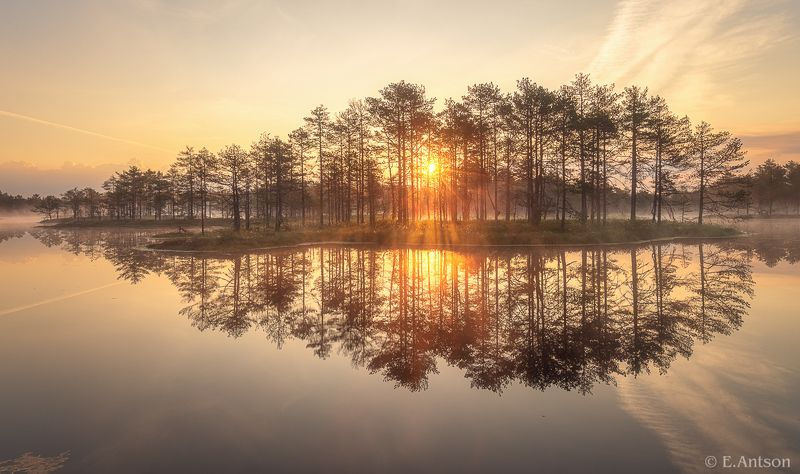 пейзаж,  природа,  болото,  рассвет Золотое утро на болоте фото превью