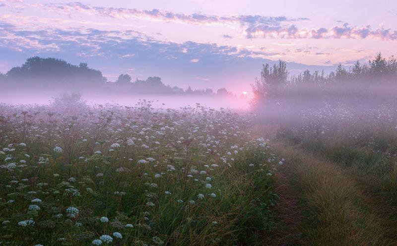 туман, лето, утро, подмосковье Летний этюдphoto preview