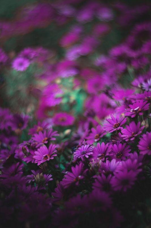 nature,nikon,flower,orange,purple,bokeh,purple,violet,dark,light,bokeh,zenit,helios, photo preview