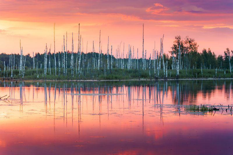 туман, московская область, утро, природа, пейзаж, лета, рассвет, солнце Рассвет на болотеphoto preview