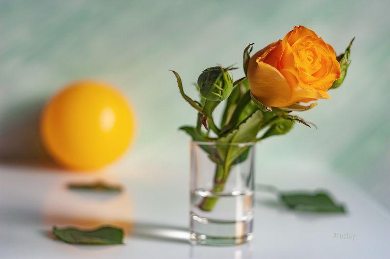 желтая роза, желтый шар, софт фокус Настроение Ундевитphoto preview