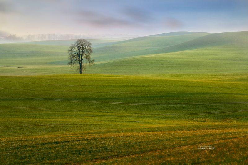 field, tree, landscape, green fields, hills, Lonely among the fieldsphoto preview