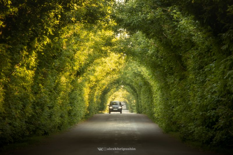 landscape Green Tunnelphoto preview