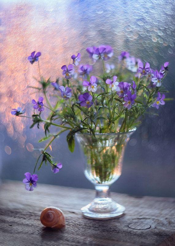 букет фиалки натюрморт цветы На рассветеphoto preview