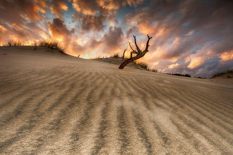 Władca wydm...photo preview