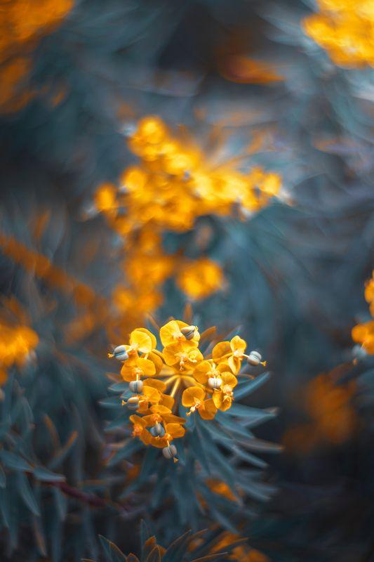 nature,nikon,flower,orange,purple,bokeh,zenit,helios,85mm, Yellow Flowersphoto preview