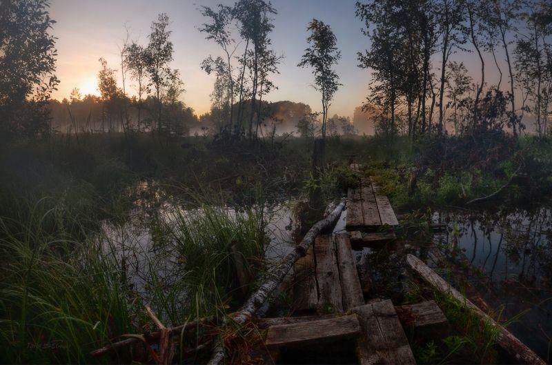 природа, пейзаж, рассвет, туман, луга Купаться!photo preview