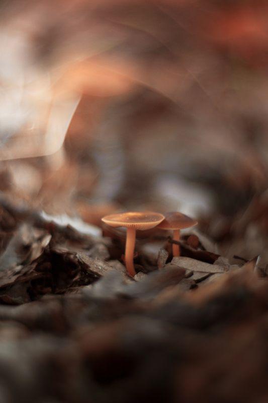 nature,nikon,flower,orange,bokeh,zenit,helios,85mm,brown,mushroom Brownphoto preview