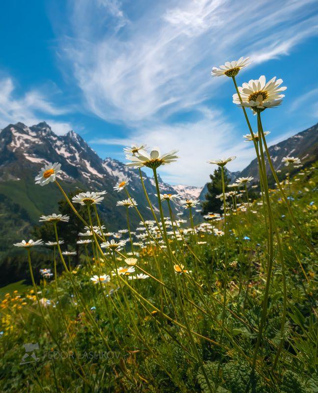 Северный Кавказ, горы, гора, вершина, путешествие, туризм, хребет, Нахарский хребет, Нахар, Махар, Трехозерьё, озеро, горное, Даутский заказник, Карачаево-Черкесия, весна, лето, цветение, цветы, лютик, облака, снег, луга, луг,  Ромашки в горахphoto preview