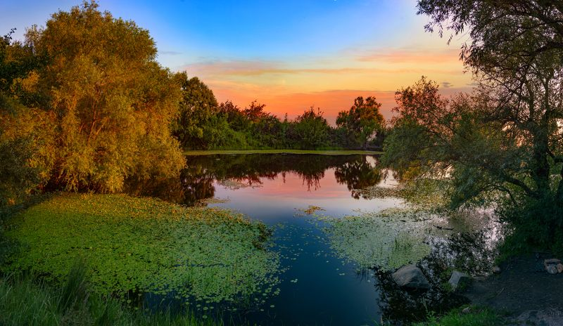 вечер,пруд,июль,природа пейзаж Июльский вечер на тихом прудуphoto preview