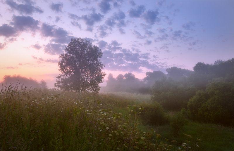 подмосковье, истра, туман, лето,утро Утренний этюдphoto preview