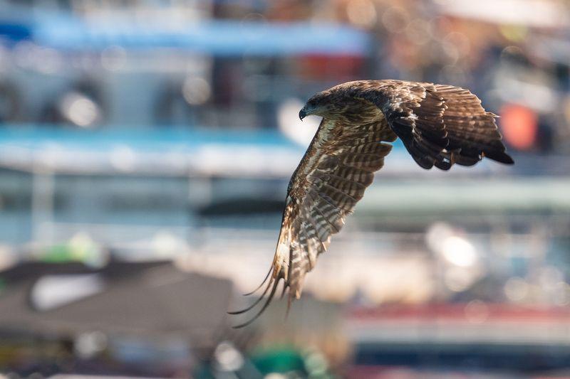 #wildlife #birds #eagle Eaglephoto preview