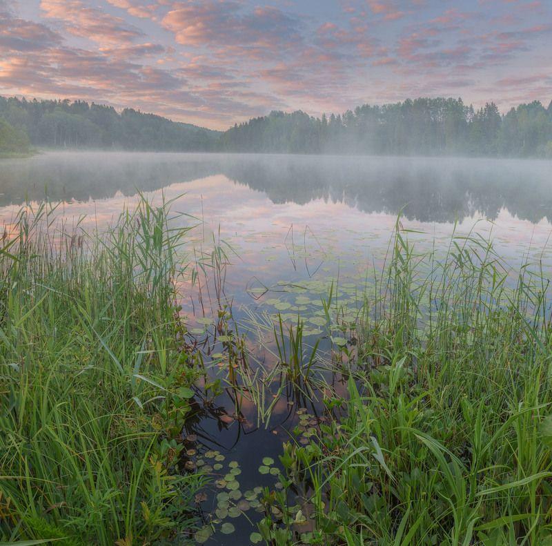 Туманное утро на озере.