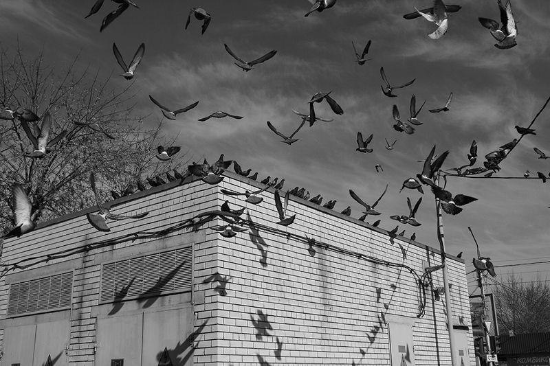 street, bw, fly, jenre, motion, real life, shadows, birds ***photo preview