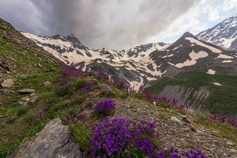 горы, альпинизм, кавказ, ледники горные колокольчики...photo preview