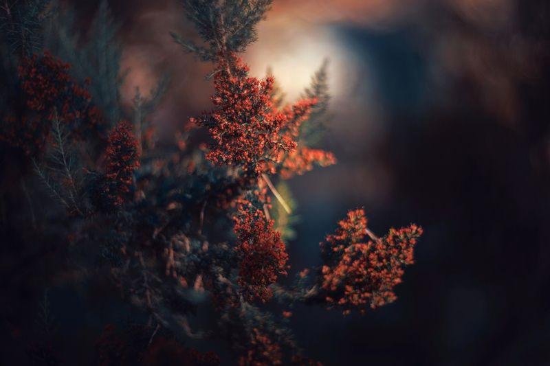 Dark,plant,light,green,orange,blue, Bluephoto preview