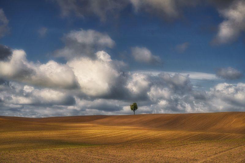 landscape Lonelyphoto preview