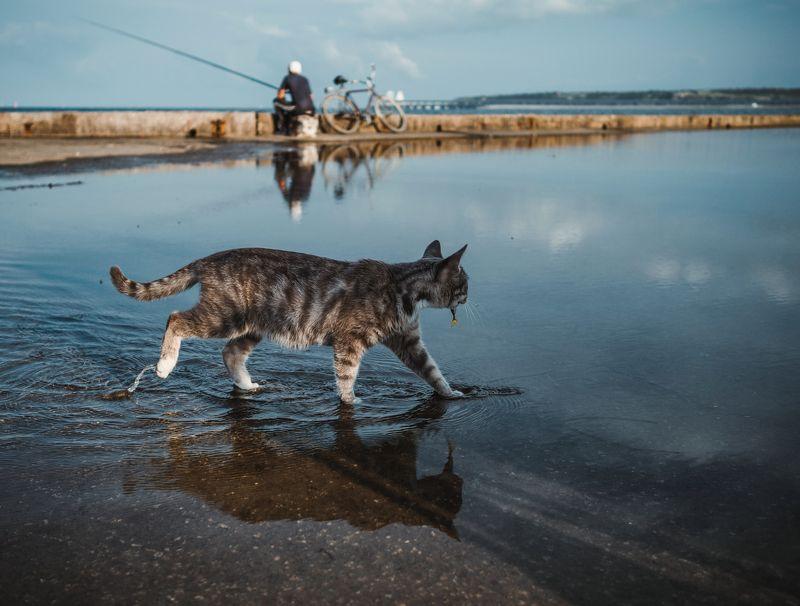 лето, вечер, рыбалка, кошка, ставрида, барабуля, керченский пролив, черное море, керчь, крым, россия, анатолий щербак Щедрый воскресный улов или везение Керченской кошки.photo preview