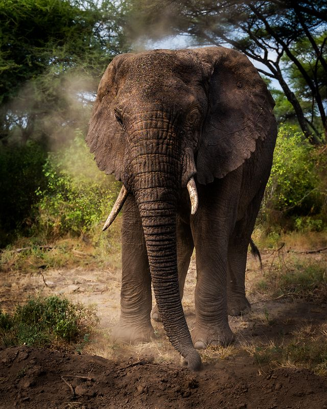 Elephant-Lake Manyara National Park-Tanzaniaphoto preview