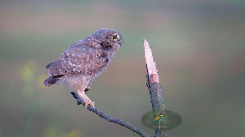 wildlife Молодое утроphoto preview