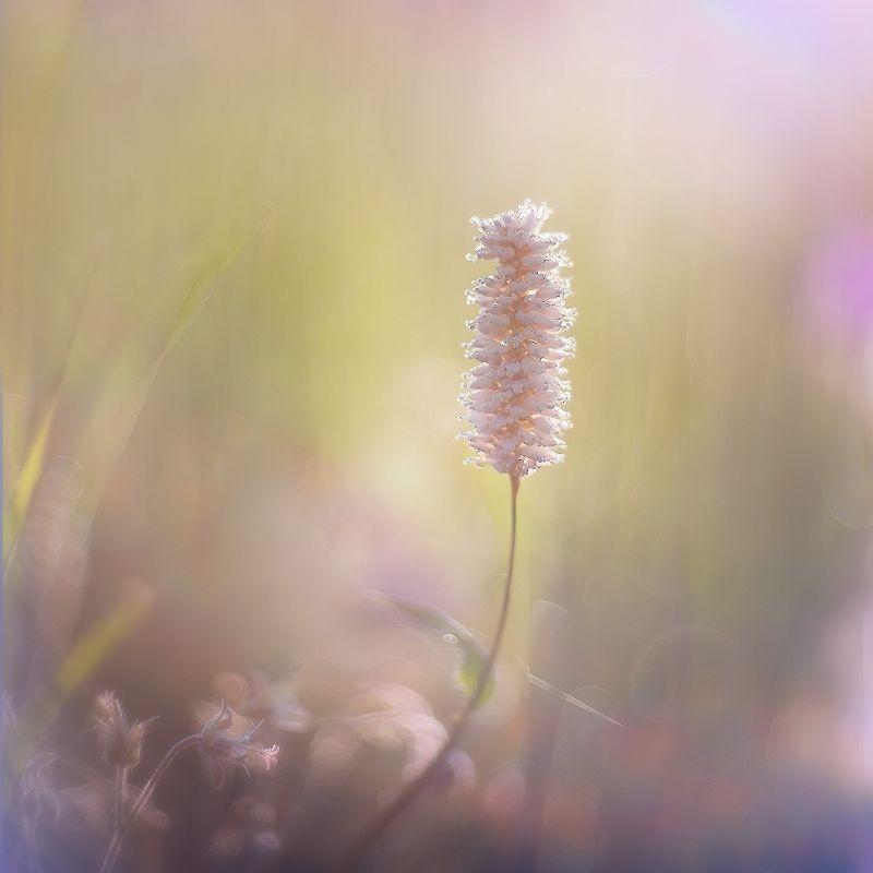 утро, свет, росинки, травинки Купаясь в утреннем свете...photo preview