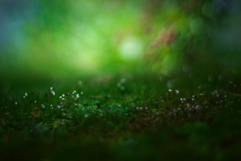 nature,nikon,flower,orange,bokeh,zenit,helios,85mm,brown,mushroom,green,white, photo preview