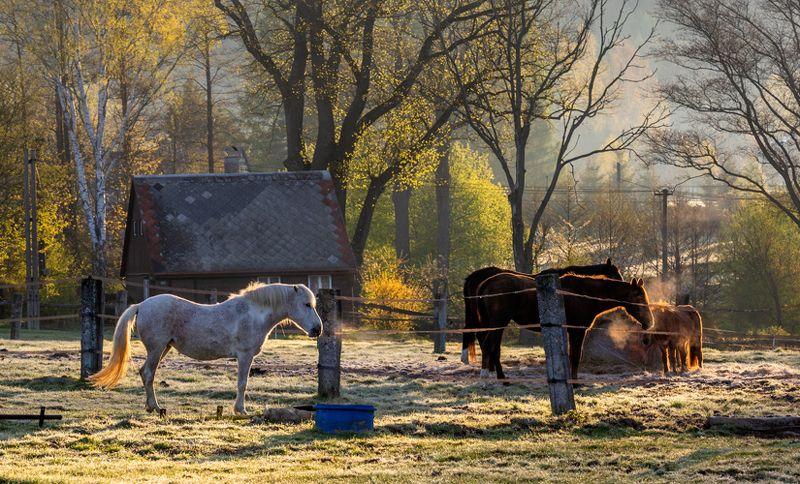 Утро с заморозкамиphoto preview