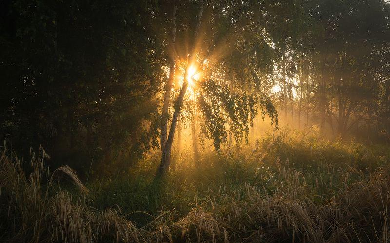 Тёплое утро июляphoto preview