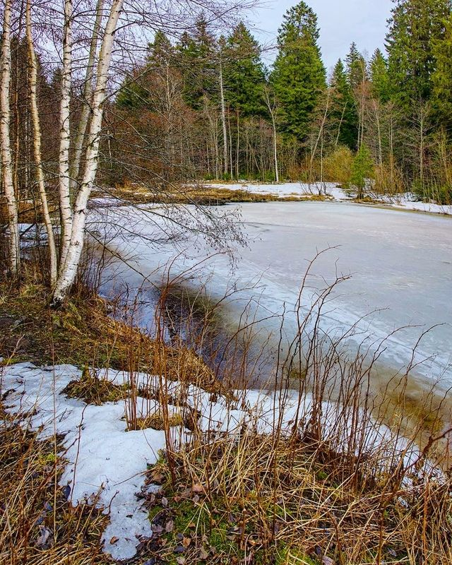 весна, лес, токсово, природа Апрельский воздухphoto preview