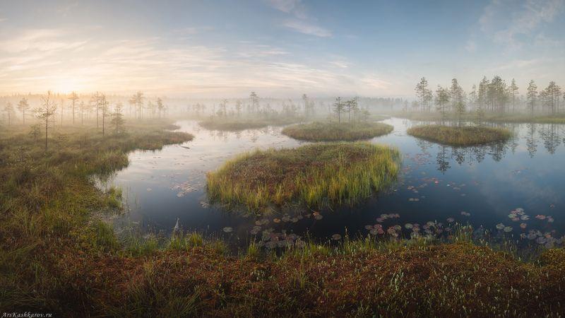 болото, ленобласть, фототур, туман, ленинградская область, сосны, дымка, болотные топи \