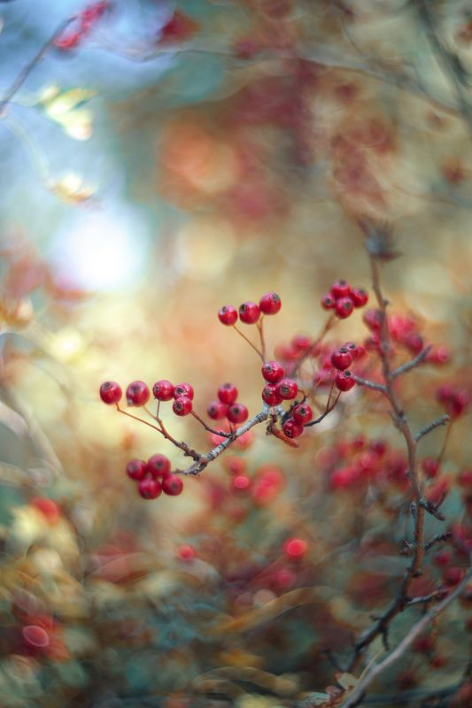 nature,nikon,red,orange,purple,bokeh,zenit,helios,85mm, Redphoto preview