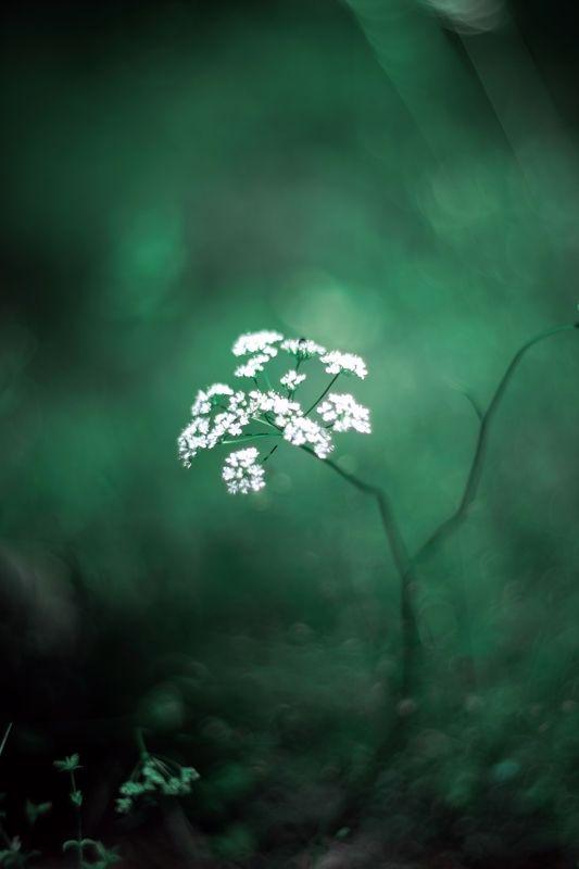 White,green,bokeh,zenit,helios,85mm,nature, Greenphoto preview