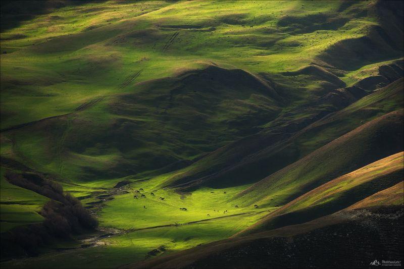 Весенняя зелень Кавказа