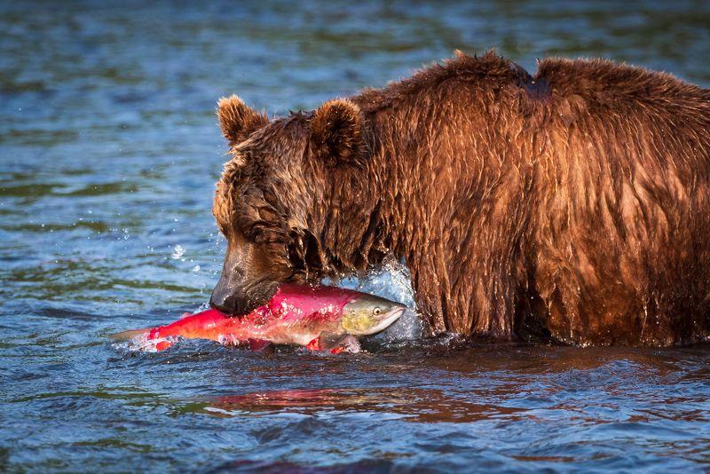Рыбалка удалась!photo preview